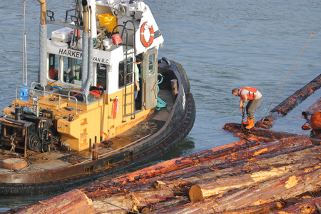 A tug boat worker attaches a chain to a log boom while the captain looks on seen here on December 12,2017.