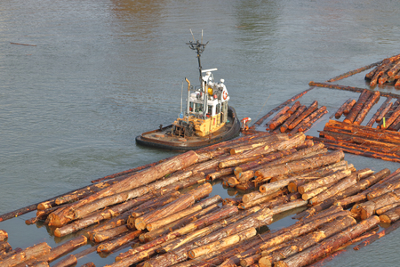 Wide shot of a a tug boat worker attaching a chain to a log boom on Vancouvers Fraser River in west coast Canada on December 12,2017. Editorial