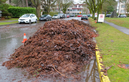 A large pile of leaves and debris has been collected from city streets and is ready for pick up.