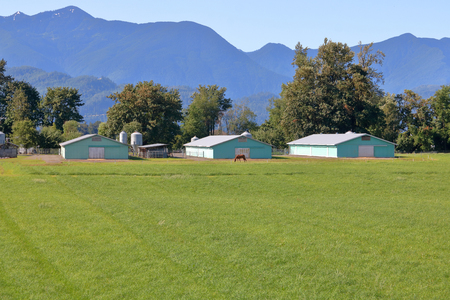 Three large wood frame farm buildings identical in size and color, that are used for storing field grown crops. Stock Photo