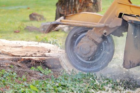 Close, profile view of a large spinning blade that is part of a stump grinding machine used to remove tree stumps from property.