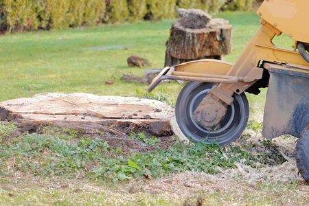 Wide view of a large spinning blade that is part of a stump grinding machine used to remove tree stumps from property.