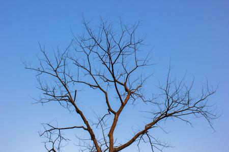 dried: dried tree