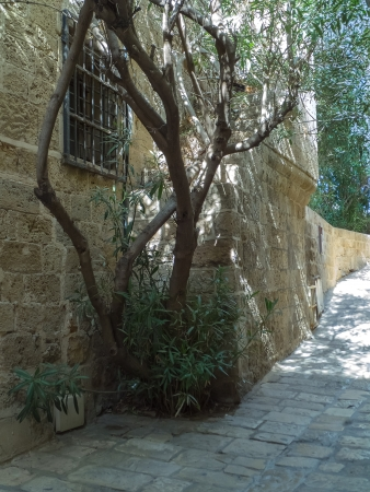 The old narrow street of Jaffa, Israel photo