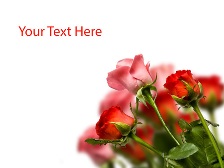 Beautiful Red and pink roses border, with copy-space photo