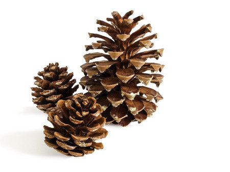 pine three: Group of three pine cones on a white background