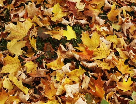 fallen leaves of plants after taking fall color