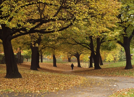 Autumn in the park, Tranquil, Vibrant Color, Yellow