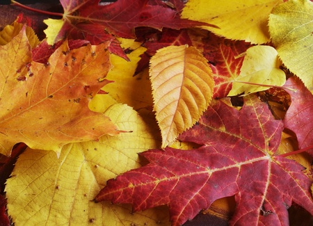 Colorful backround of fallen autumn leaves
