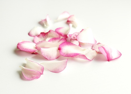 Romantic pink rose petals on white background