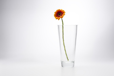 Yellow Gerbera Daisy, Barberton Daisy or African Daisy, in a stylish glass vase for a simple minimalist interior decoration, on a white studio background with copyspace Stock Photo
