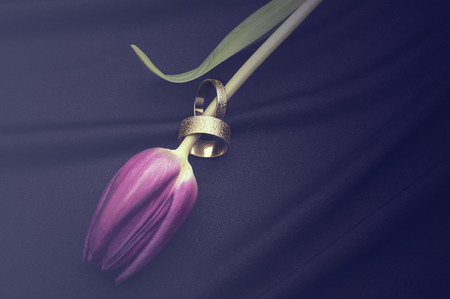White gold wedding bands threaded over the stem of a fresh purple tulip lying on a soft black textile background with copyspace for a romantic greeting card or invitation Stock Photo