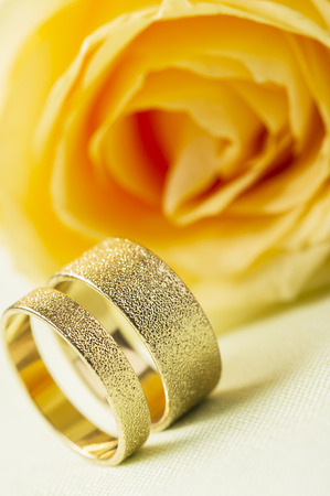 stippled: Yellow rose with two elegant textured gold wedding rings standing upright side by side on a white background with focus to the rings for a stylish greeting card or wedding invitation