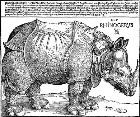durer: Copia vettoriale di una xilografia Rhinoceros (1515) dal tedesco medievale artista Albrecht Durer