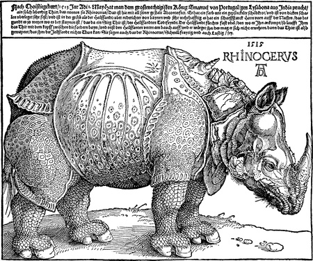 durer: Vector copy of a Rhinoceros woodcut (1515) by German medieval artist Albrecht Durer