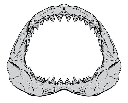 La mandíbula de tiburón aislado en blanco Ilustración de vector