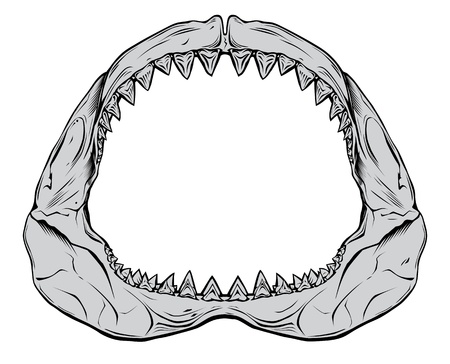 shark mouth: Shark jaw isolated on white