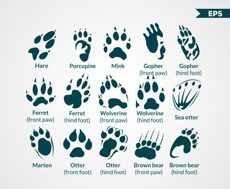 Animals Footprints  イラスト・ベクター素材