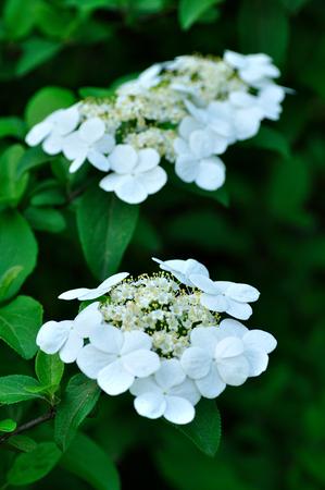 jade: Jade flower