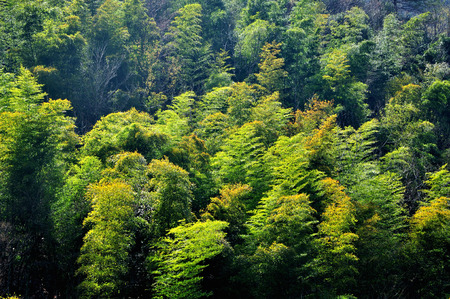 horizontal format horizontal: Bamboo