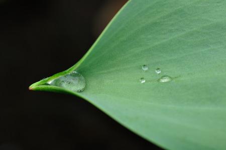 dew: Dew
