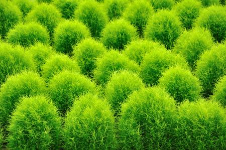 horizontal format horizontal: Small plush pine