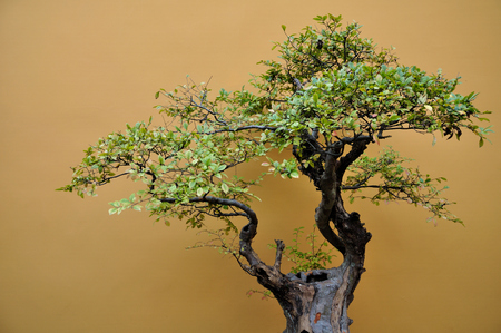 horizontal format horizontal: Potted plants