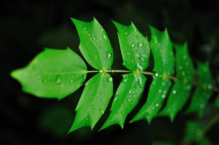 horizontal format horizontal: Leaf