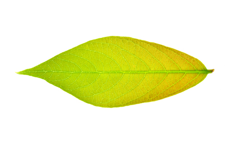 horizontal format horizontal: A leaf Stock Photo