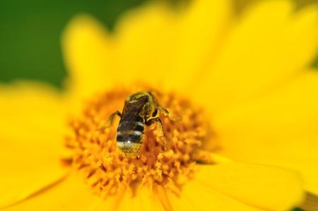 close up: Close up to a bee
