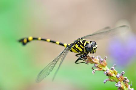 dragonfly: A Dragonfly