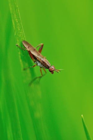 diptera: Close up to an insect