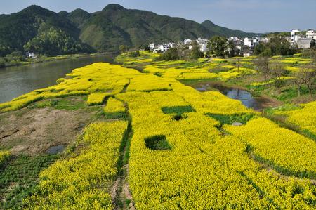 pastoral scenery: Pastoral scenery Stock Photo
