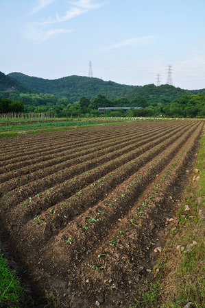 gua: vegetable Field Stock Photo