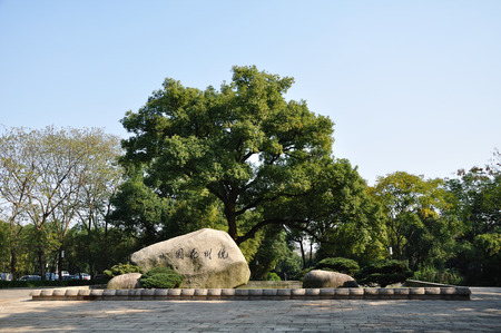 cinnamomum: Hangzhou garden Editorial