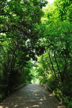 treelined: Tree-lined trail Stock Photo