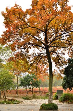 road autumnal: Autumn scenery Stock Photo
