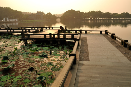 horizontal format horizontal: lotus pond Stock Photo