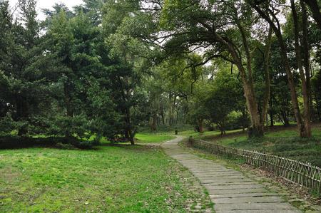 the color of silence: Hangzhou Botanical Garden Stock Photo