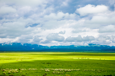 Landscape view of grassland under the clear blue sky