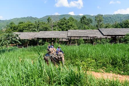 domestication: Koh Samui Thailand elephant show
