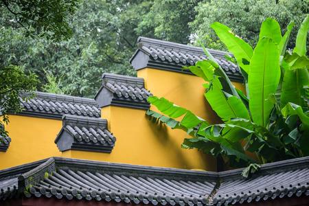 伝統的なレンガの壁の隣に成長するバナナの木