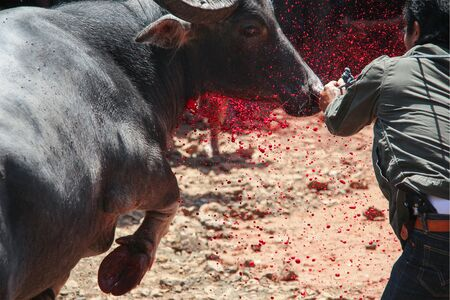 At this very traditional funeral ceremony in Sulawesi, a island of Indonesia in south-east asia, they slaughtered 10 buffalos with there knives like this.