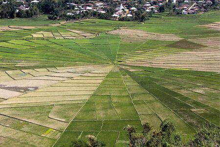 Spider Web Rice Fields with many different colors in Flores, Indonesia.