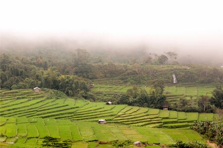 Fresh green rice field terraces in front of foggy forest in Flores, Indonesia.