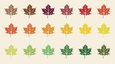colorful maple leaves Illustration