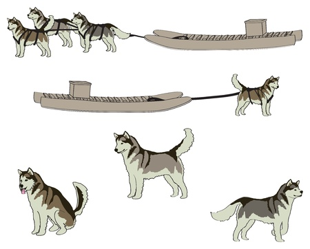 Huskies and Komatik Vector