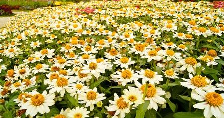 Flower texture in gardens photo