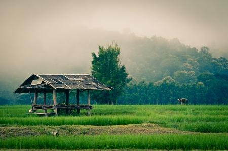Farmer in a green field in the morning