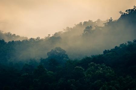Mistige vroege ochtend het bos met een beetje zonlicht Stockfoto - 10633647